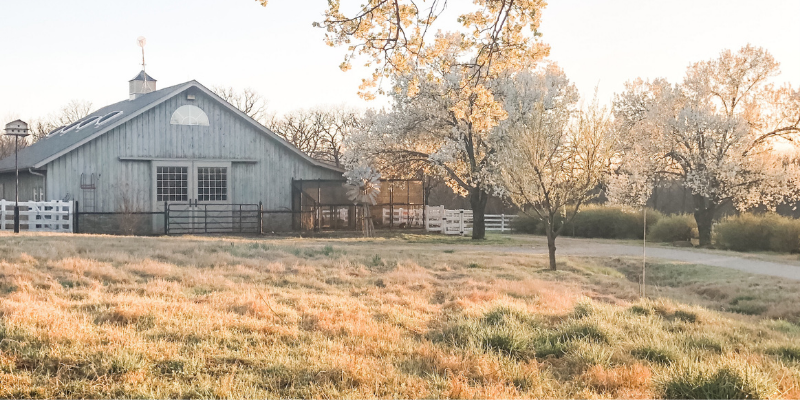 Barn surrounded by blooming trees