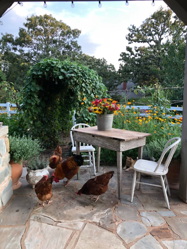 New Hampshire chickens on the barn porch