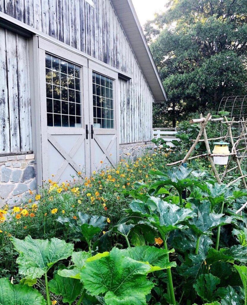 vegetable garden and barn