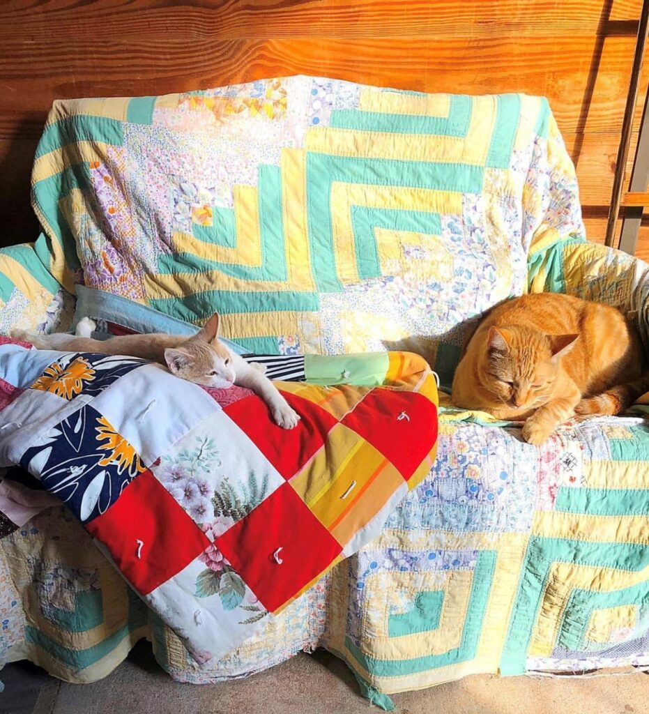 Quilts and Kitties