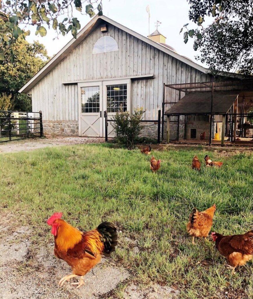 Our Custom Chicken Coop